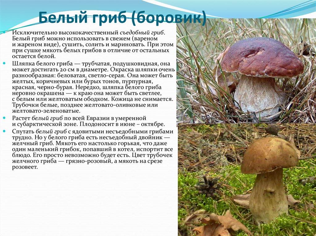 Гриб — википедия. что такое гриб