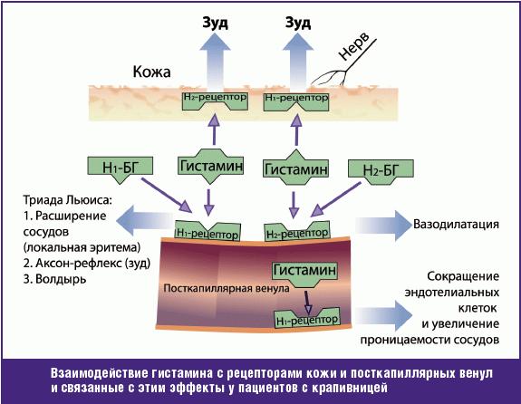 Гистамин: что показывает анализ, функции в организме, непереносимость