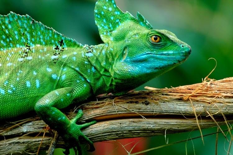 Рептилии - это... рептилии: фото :: syl.ru