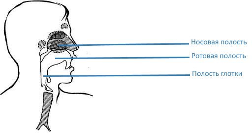 Что можно узнать о человеке по тембру его голоса — тестостерон