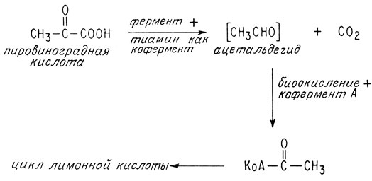 Тиамин — википедия. что такое тиамин