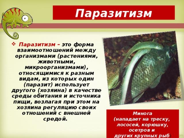 Охарактеризуйте различные формы паразитизма. каким образом паразиты наносят вред организму-хозяину? приведите - универ soloby