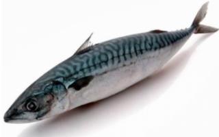 Сибас рыба википедия — здесь рыба
