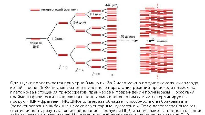 Пцр-анализ: метод диагностики, выявляемые инфекции