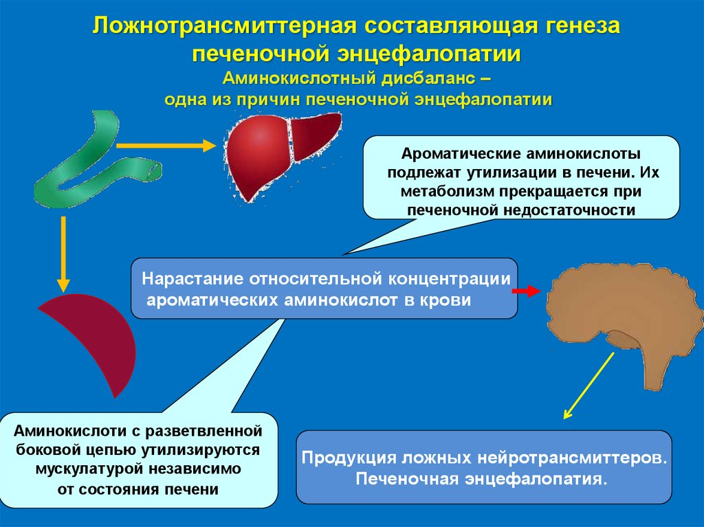 Энцефалопатия печени: симптомы, лечение печеночной формы заболевания при циррозе