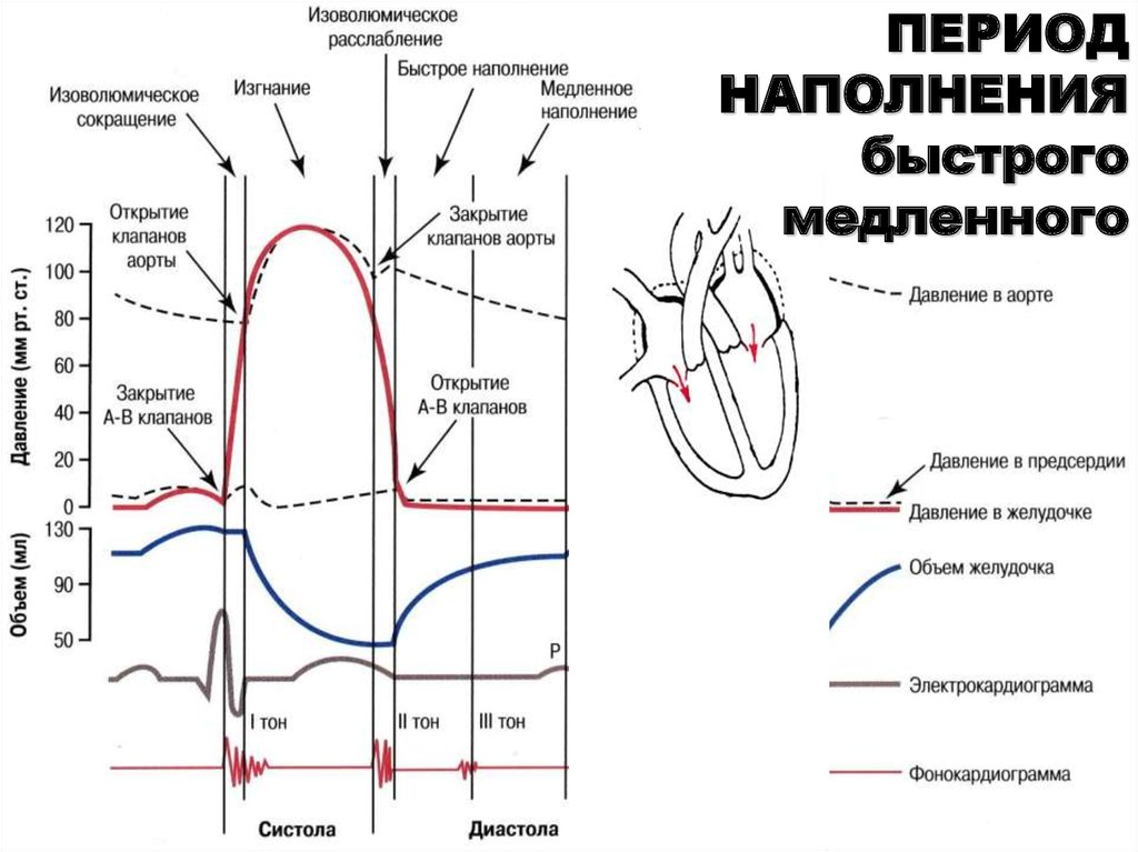 ✅ что такое диастолическое и систолическое артериальное давление - денталюкс.su