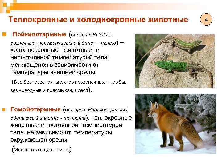 3.1.4. температурные адаптации гомойотермных организмов   глава 3. важнейшие абиотические факторы и адаптации к ним организмов   общая экология   литература / наша-природа.рф