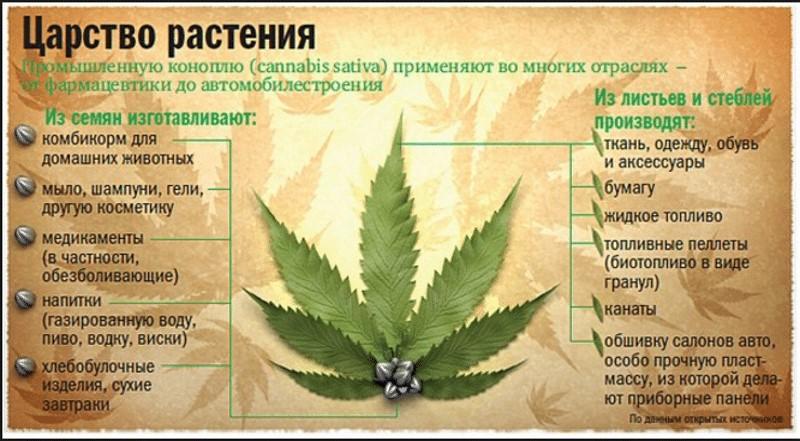 Маис (растение)
