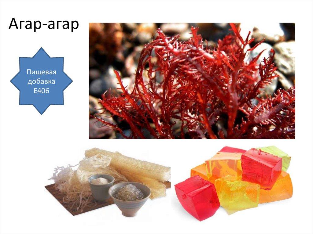 Агар-агар — веганский заменитель желатина. чем он полезен и как его используют?