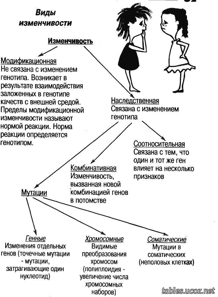 Наследственная изменчивость виды, характеристика и примеры