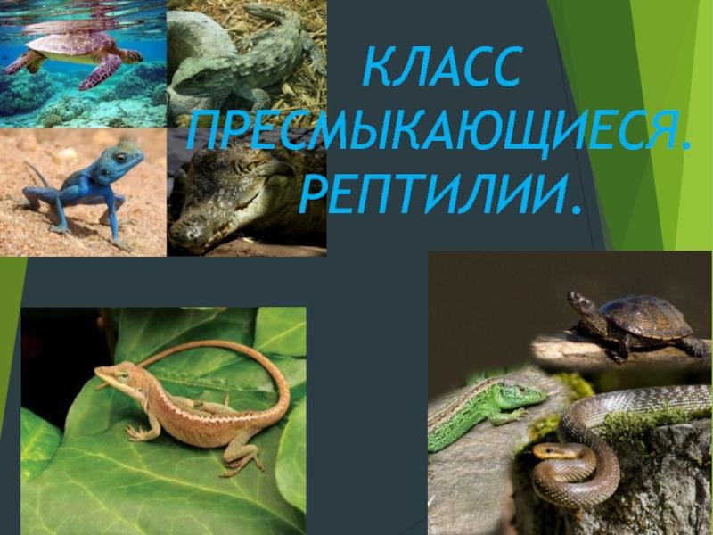 Общие признаки и характерные особенности рептилий