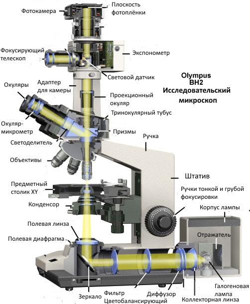 История создания микроскопа, его строение, правила работы