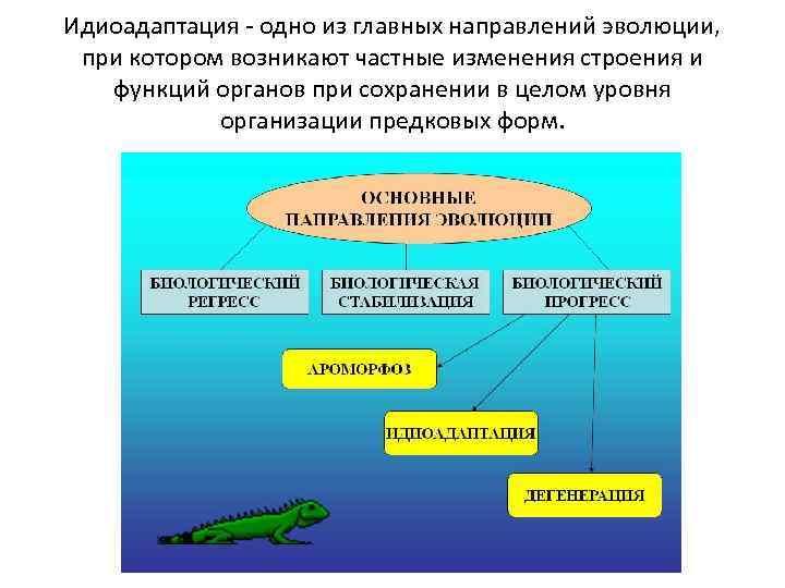 Что такое идиоадаптация? это один из способов хода эволюции :: syl.ru