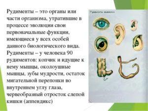 Рудиментарные органы — википедия с видео // wiki 2