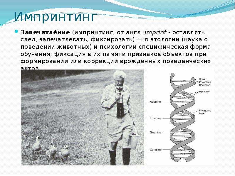 Импринтинг (запечатление) в психологии: примеры у человека