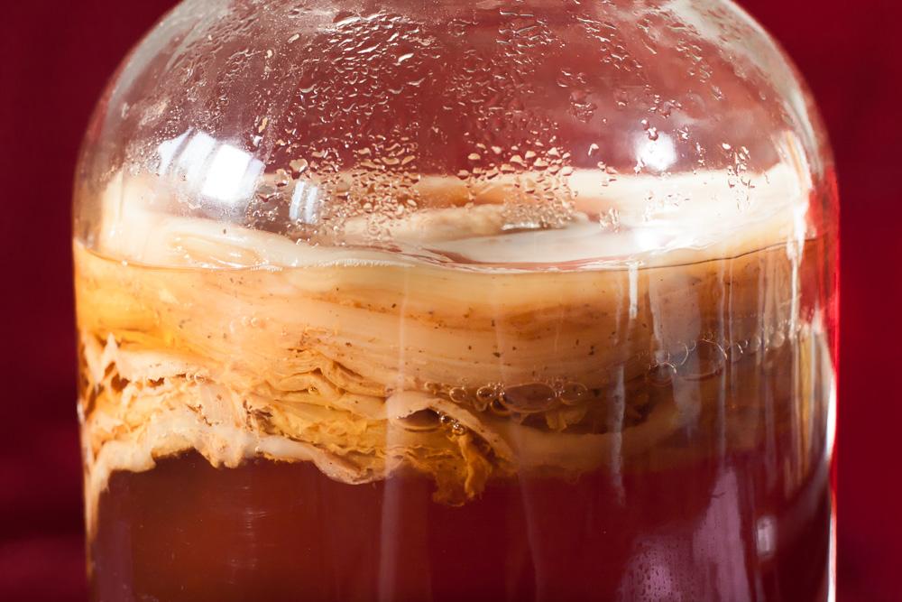 Вся правда о чайном грибе, или комбуче: насколько он полезен :: здоровье :: рбк стиль