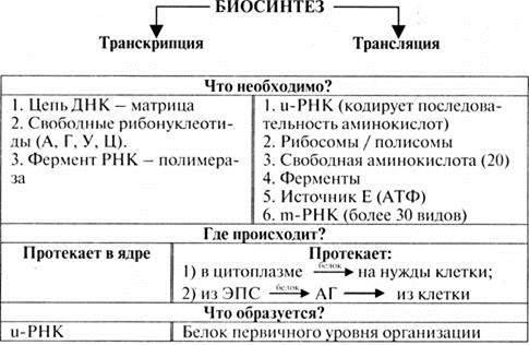 Что такое транскрипция в биологии и как она происходит :: syl.ru