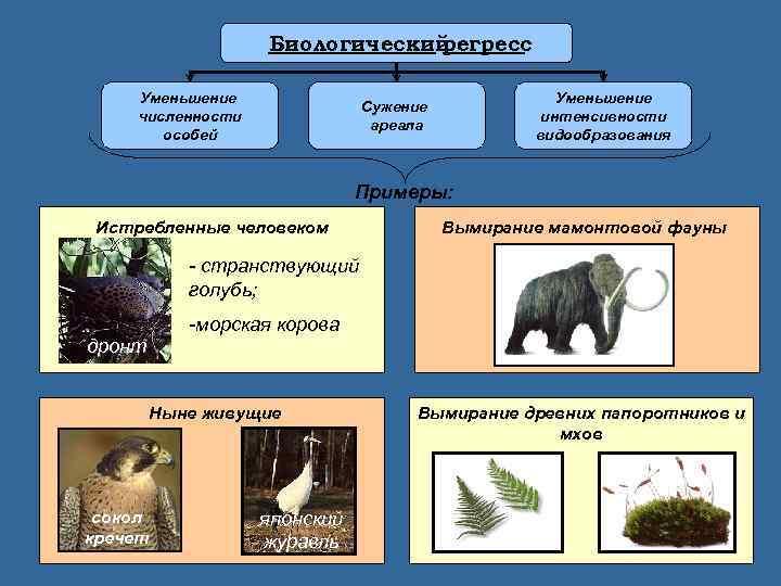 Прогресс и регресс в эволюции