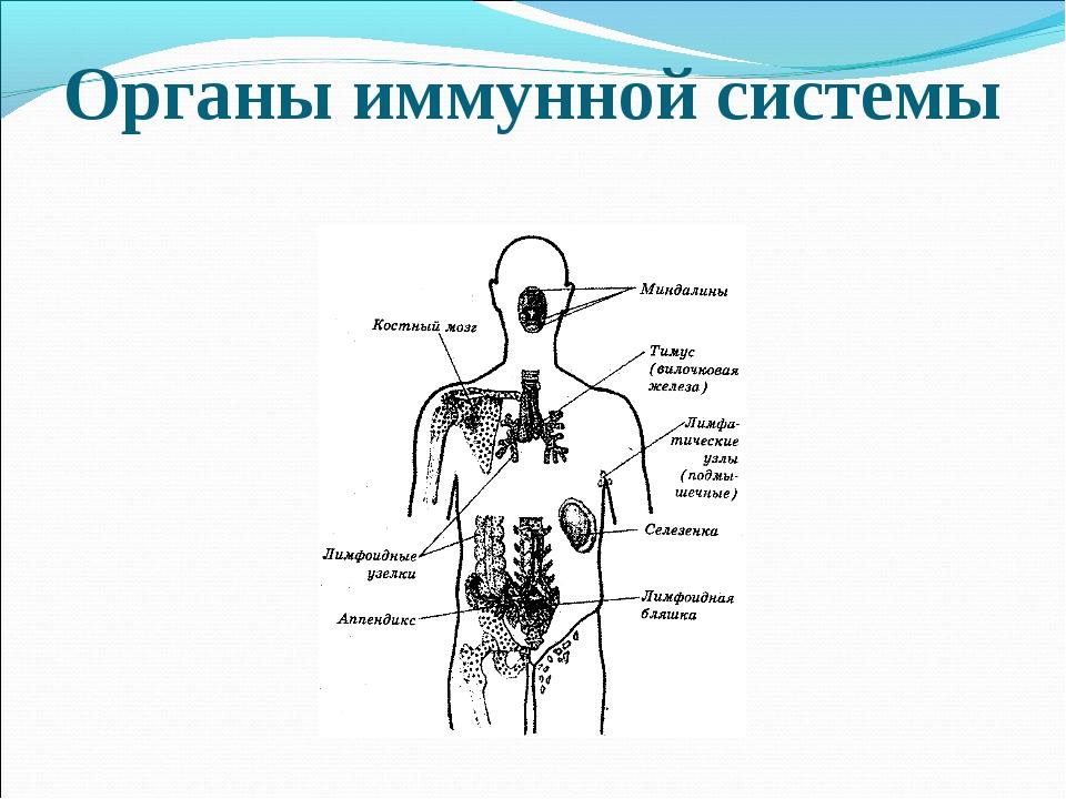 Специфический и неспецифический иммунитет