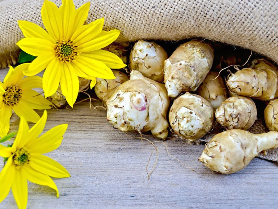 Выращивание топинамбура, его описание и полезные свойства — cельхозпортал