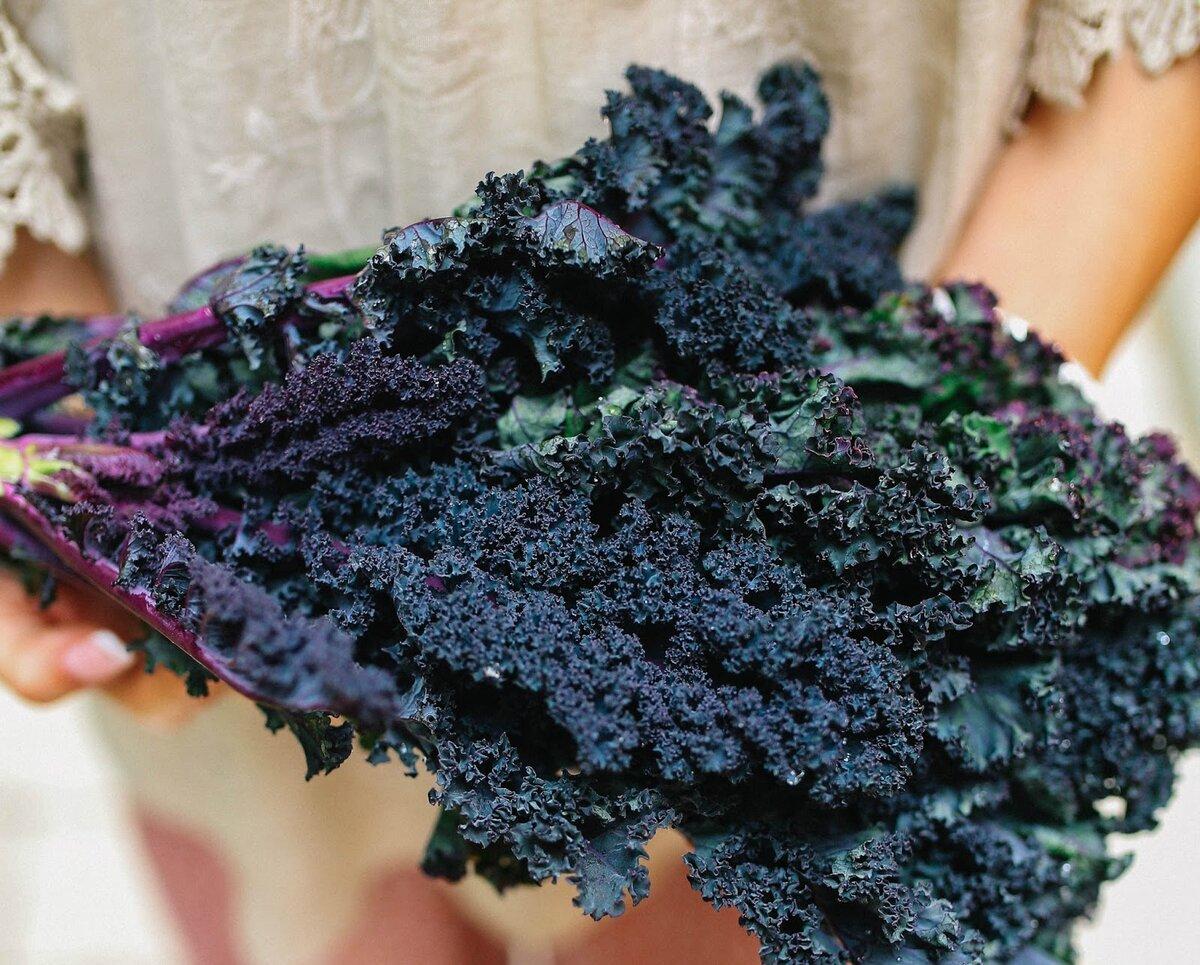 Капуста кале (kale, кейл) листовая кудрявая: что это такое, описание сортов сибирская, красная русская, тоскана и иных, нюансы выращивания кучерявого овоща из семян