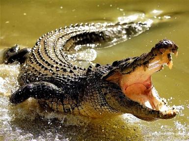 Наркотик крокодил, последствия наркотика крокодил, наркотик крокодил состав, крокодил наркомании, наркотик крокодил фото, как сделать наркотик крокодил?