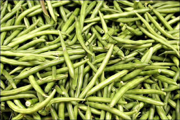 Фасоль – польза и вред бобовой культуры для организма человека