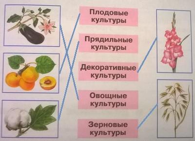 Культурные травы: названия. лекарственные культурные растения и травы