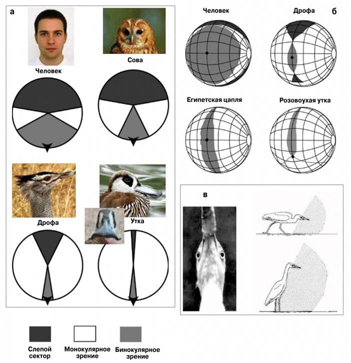 Измерение остроты зрения