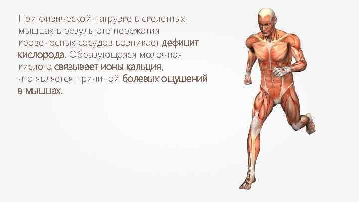 Молочная кислота в мышцах: как формируется и как избавиться