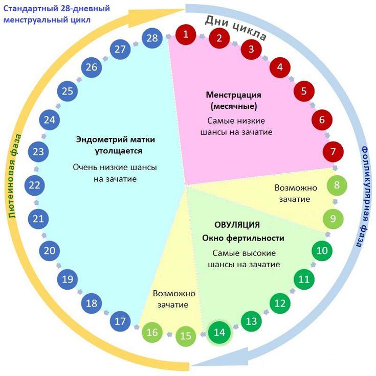 Как считать цикл месячных и для чего проводить данные расчеты