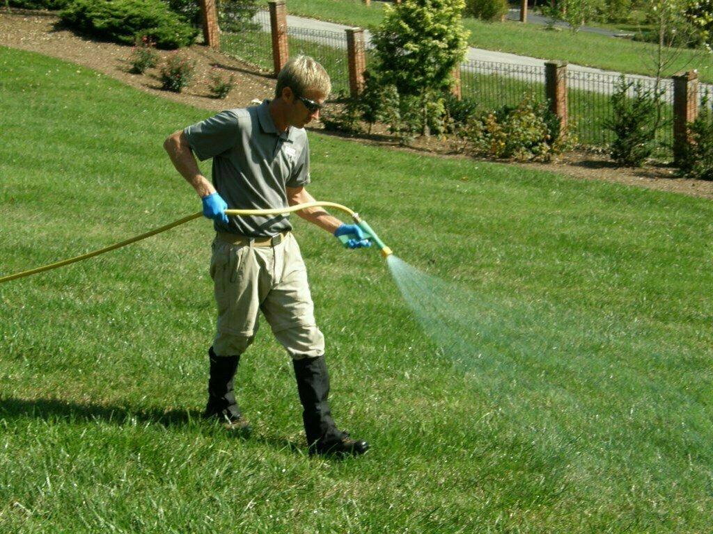 Жидкий газон - что это такое, его плюсы и минусы
