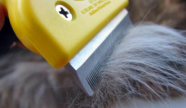 Фурминатор для кошек: 85 фото как вычесывать кошек фуминатором