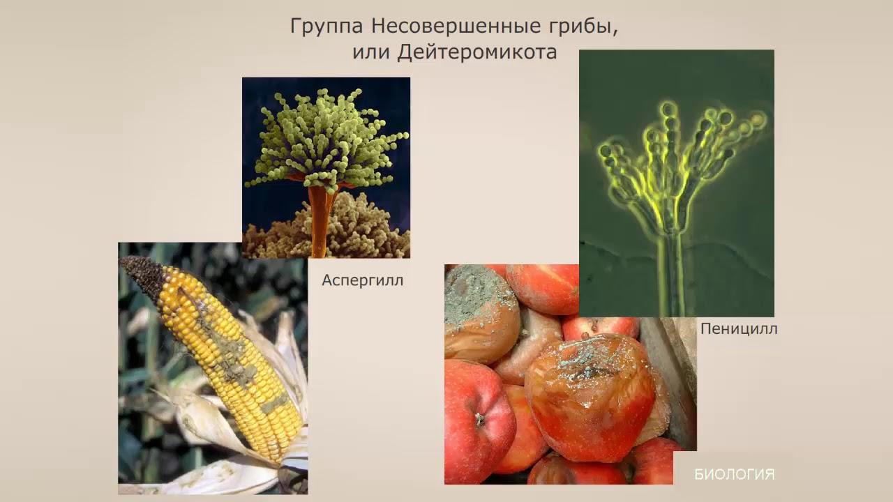 Бактерии-сапрофиты: какие роли они играют в природе