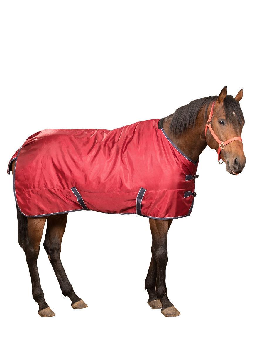 Попона для лошади: их предназначение и фото обзор