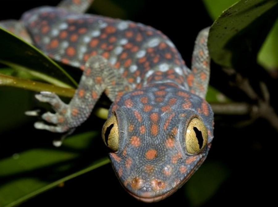 Пресмыкающиеся животные (рептилии) и их представители