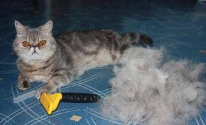 Фурминатор для кошек, ? что это такое, как подобрать и использовать