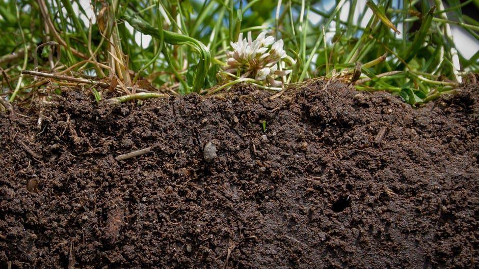 Гумус (22 фото): что это такое и в какой цвет он окрашивает почву? какие организмы участвуют при его образовании? определение и формирование