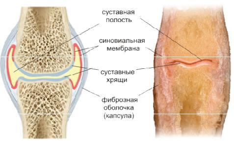 Синовиальная жидкость что это такое — суставы