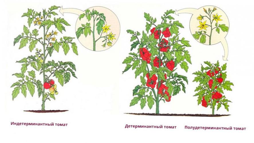 Период вегетации это когда