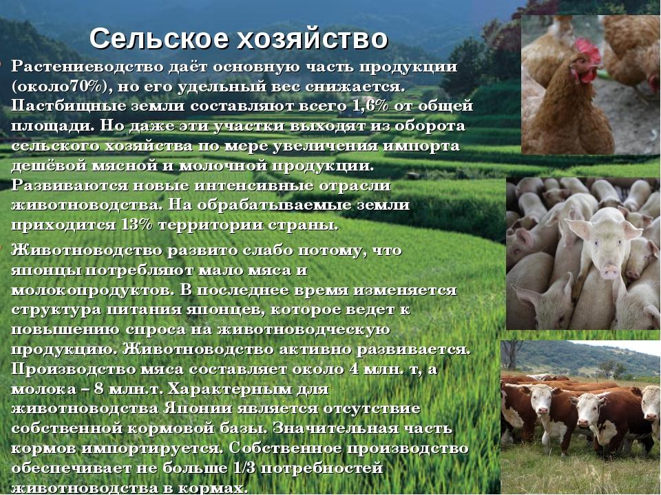 Скотоводство: развитие, отрасли, молочное, мясное, продукция