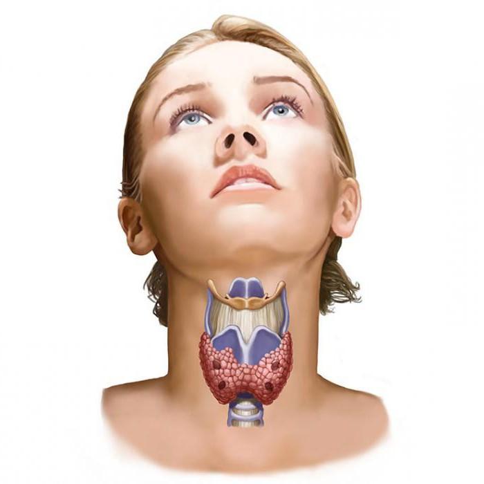 Что такое голубиный зоб. зоб (анатомия)