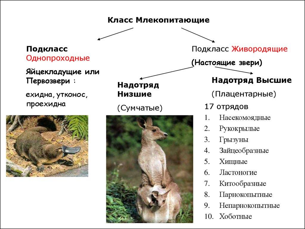 Класс млекопитающие: описание, виды, питание, поведение, размножение, роль и защита
