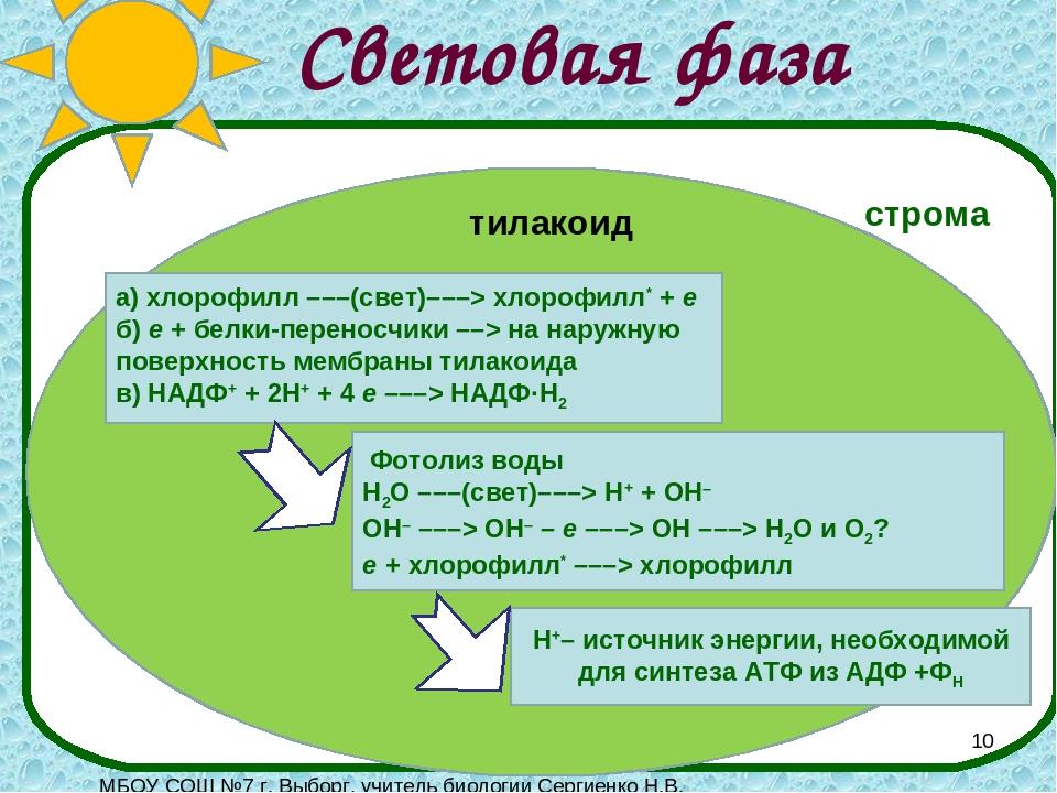Фотолиз воды при фотосинтезе