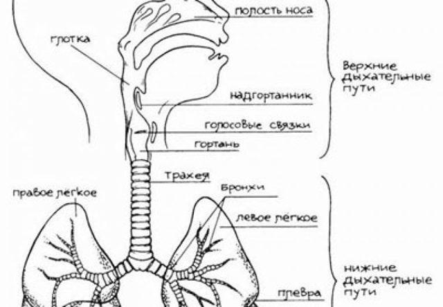 Врождённый стридор у новорождённых: что это такое pulmono.ru врождённый стридор у новорождённых: что это такое