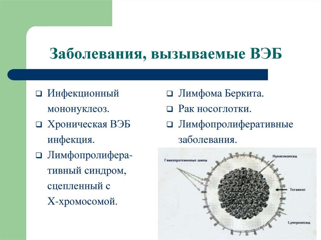 Вирус эпштейна–барр: симптомы и терапия болезни