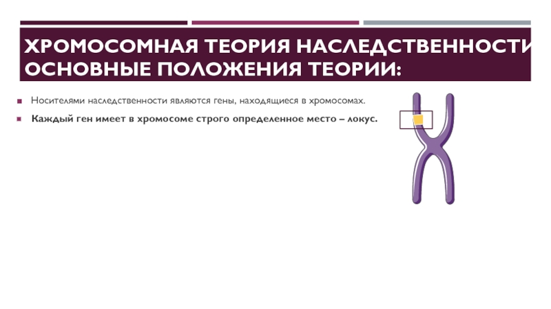 Хромосомный кроссовер - chromosomal crossover - qwe.wiki