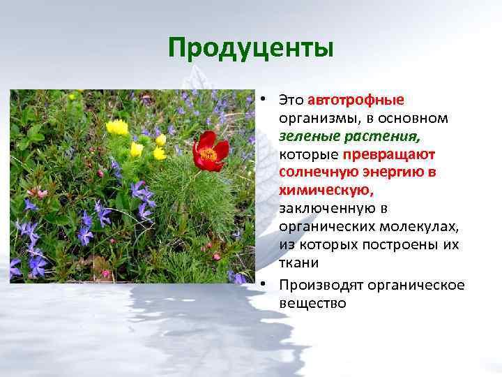 Редуценты: примеры, роль в природе. продуценты, консументы, редуценты