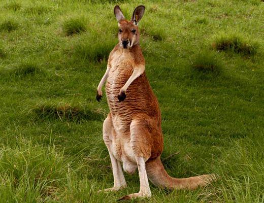 Что такое слинг, рюкзак-кенгуру и хипсит и как выбрать подходящее