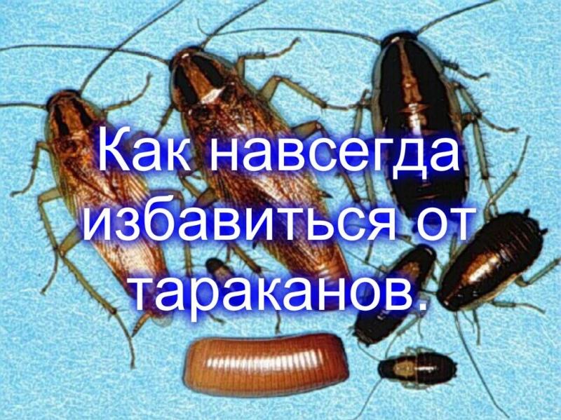 """Откуда берутся тараканы и сколько живут - служба дезинфекции """"экоконтроль"""""""